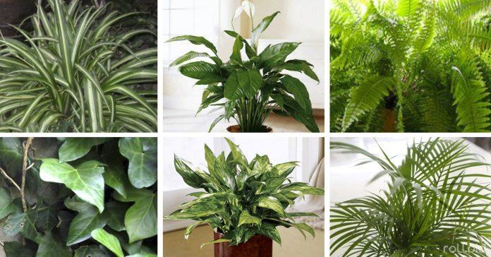 Plantas positivas para el hogar
