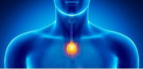 Glándula Timo. Sistema inmunológico Reiki